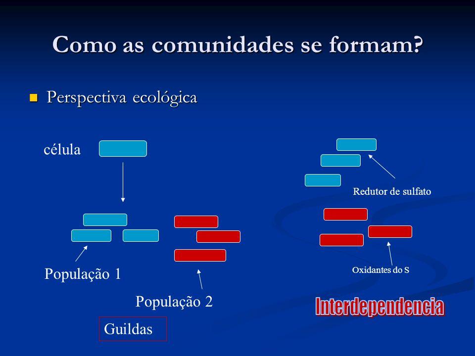 Como as comunidades se formam? Perspectiva ecológica Perspectiva ecológica célula População 1 População 2 Guildas Redutor de sulfato Oxidantes do S