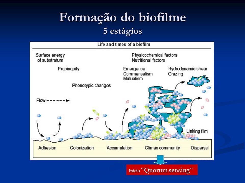 Formação do biofilme 5 estágios Início Quorum sensing