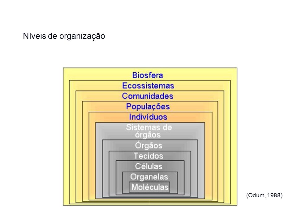 Indivíduos: são os organismos Populações: grupo de indivíduos com características comuns – origem comum (ancestralidade) Comunidades: consiste de um maior ou menor número de populações ocupando um habitat particular.