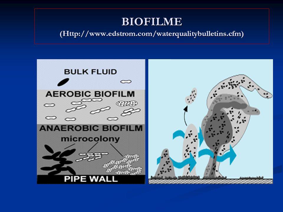 BIOFILME (Http://www.edstrom.com/waterqualitybulletins.cfm)