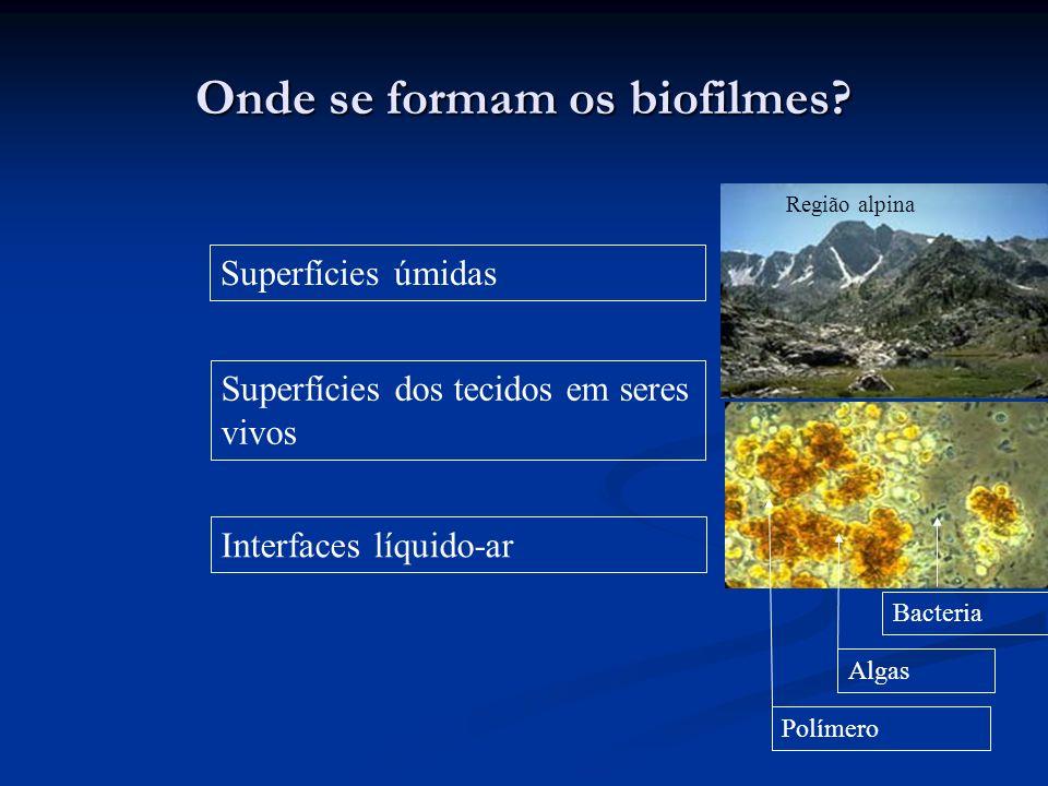 Onde se formam os biofilmes? Superfícies úmidas Superfícies dos tecidos em seres vivos Interfaces líquido-ar Algas Bacteria Região alpina Polímero