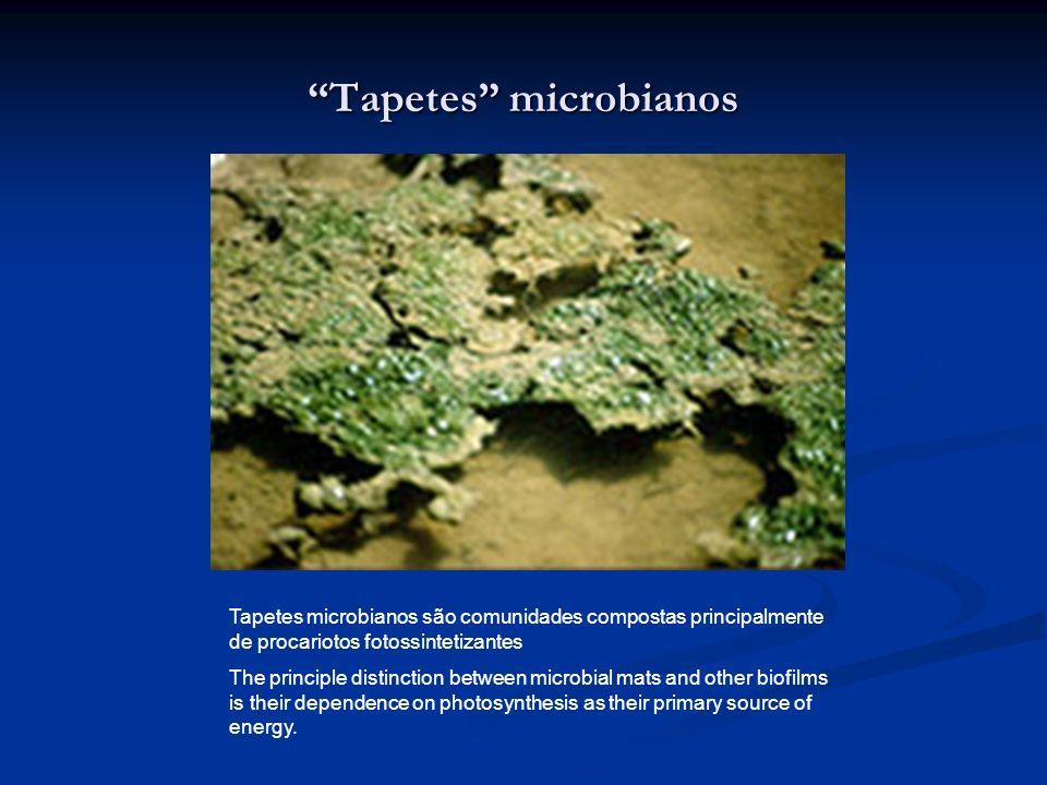 Tapetes microbianos Tapetes microbianos são comunidades compostas principalmente de procariotos fotossintetizantes The principle distinction between m