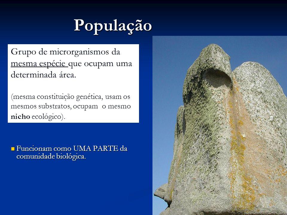 População Funcionam como UMA PARTE da comunidade biológica. Funcionam como UMA PARTE da comunidade biológica. Grupo de microrganismos da mesma espécie
