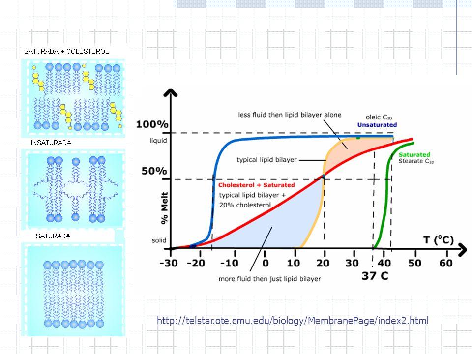 http://telstar.ote.cmu.edu/biology/MembranePage/index2.html