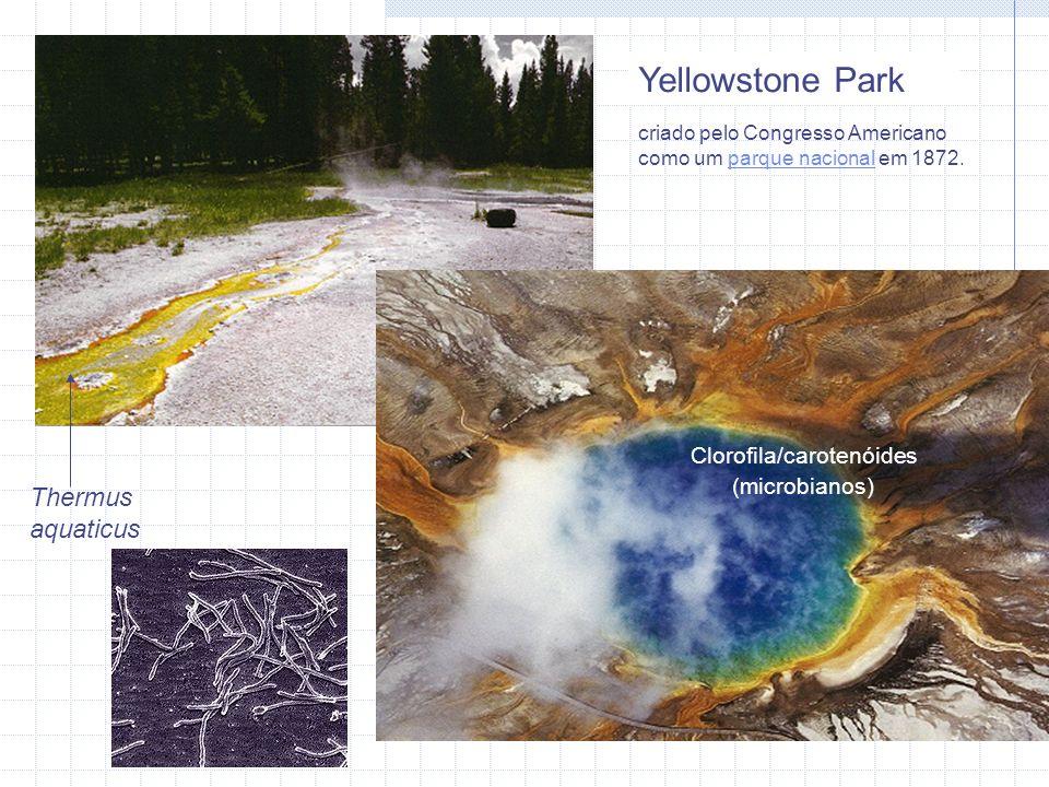 Yellowstone Park Thermus aquaticus Clorofila/carotenóides (microbianos) criado pelo Congresso Americano como um parque nacional em 1872.parque nacional