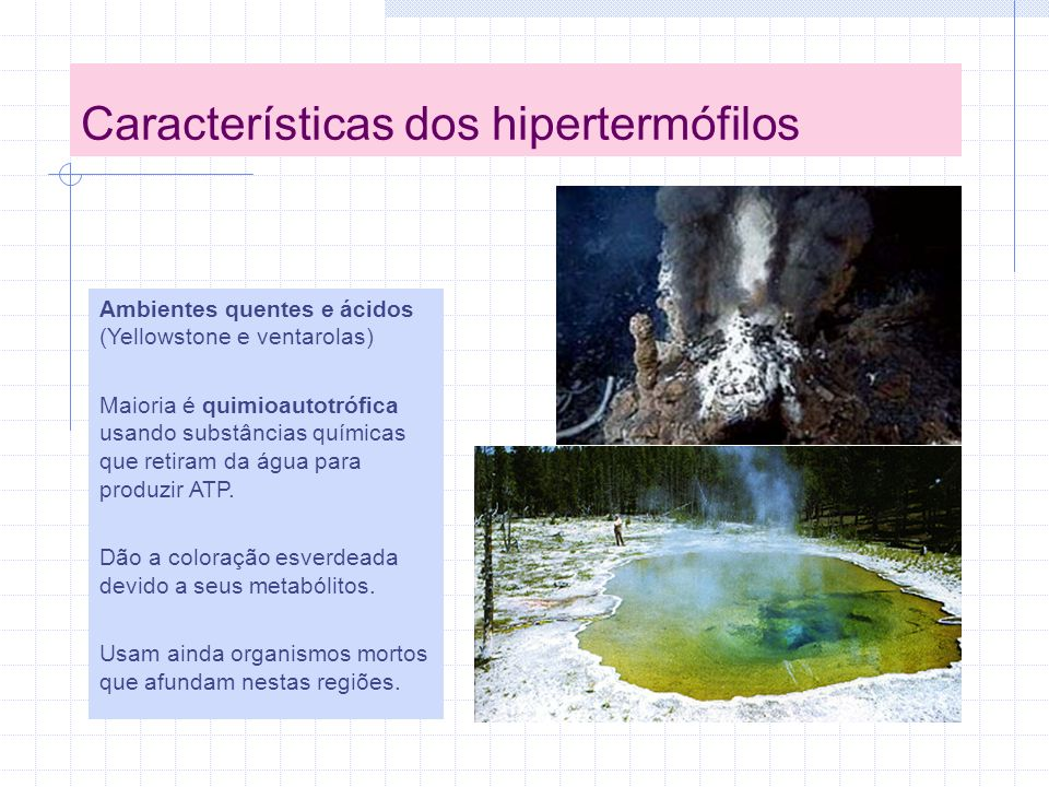 Características dos hipertermófilos Ambientes quentes e ácidos (Yellowstone e ventarolas) Maioria é quimioautotrófica usando substâncias químicas que retiram da água para produzir ATP.
