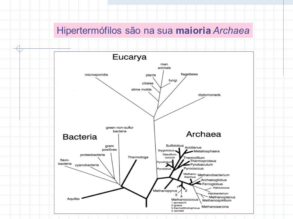 Hipertermófilos são na sua maioria Archaea