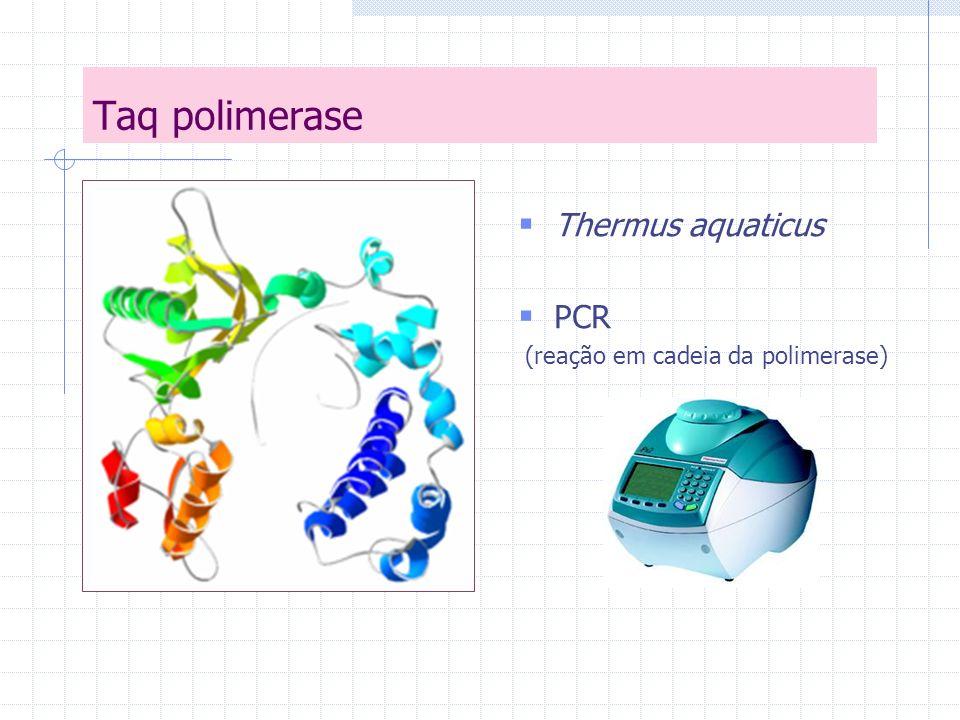 Taq polimerase Thermus aquaticus PCR (reação em cadeia da polimerase)