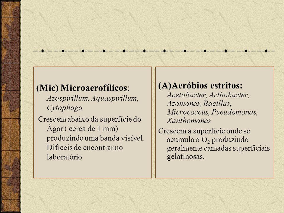 (Mic) Microaerofílicos: Azospirillum, Aquaspirillum, Cytophaga Crescem abaixo da superfície do Ágar ( cerca de 1 mm) produzindo uma banda visível. Dif