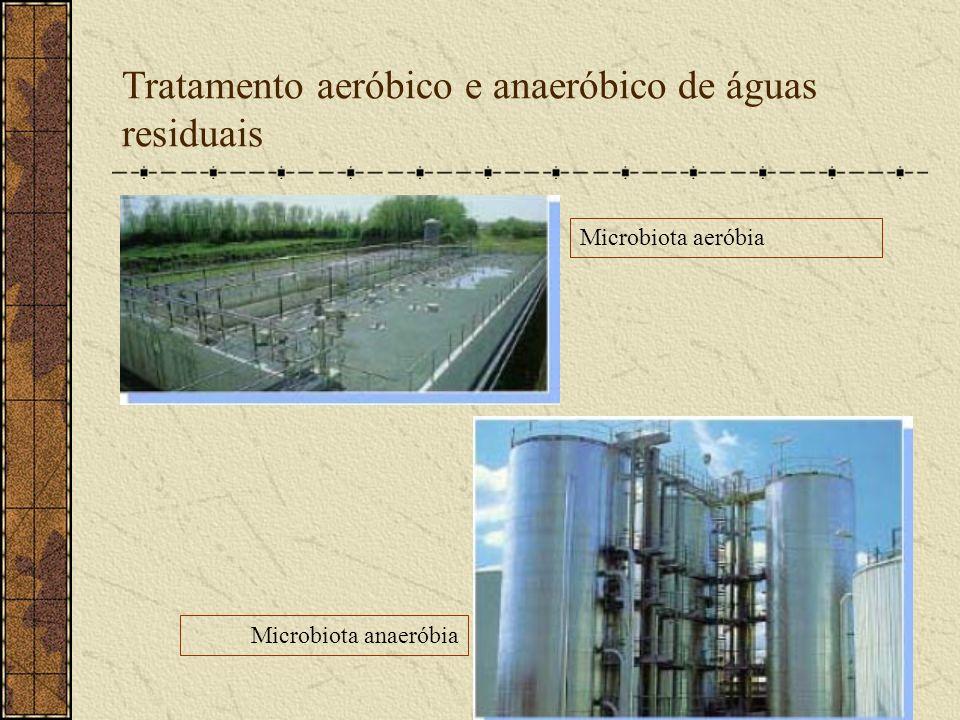 Tratamento aeróbico e anaeróbico de águas residuais Microbiota aeróbia Microbiota anaeróbia