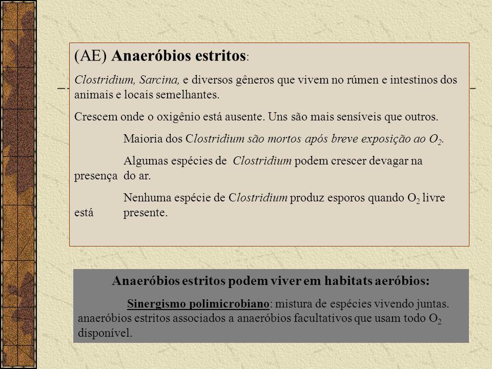 (AE) Anaeróbios estritos : Clostridium, Sarcina, e diversos gêneros que vivem no rúmen e intestinos dos animais e locais semelhantes. Crescem onde o o