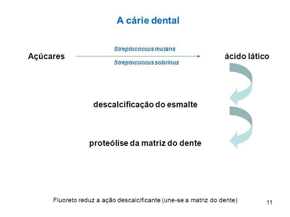 A cárie dental Açúcares ácido lático descalcificação do esmalte proteólise da matriz do dente Fluoreto reduz a ação descalcificante (une-se a matriz do dente) 11 Streptococcus mutans Streptococcus sobrinus