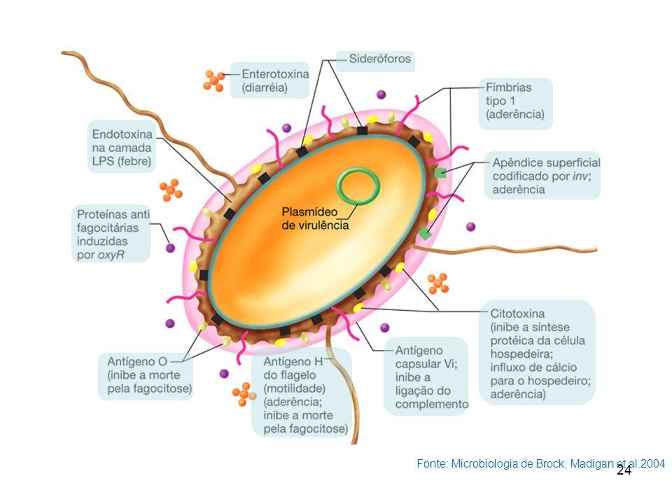 Fonte: Microbiologia de Brock; Madigan et al.2004 24