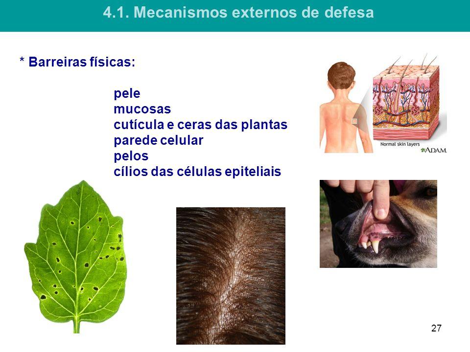 * Barreiras físicas: pele mucosas cutícula e ceras das plantas parede celular pelos cílios das células epiteliais 4.1.