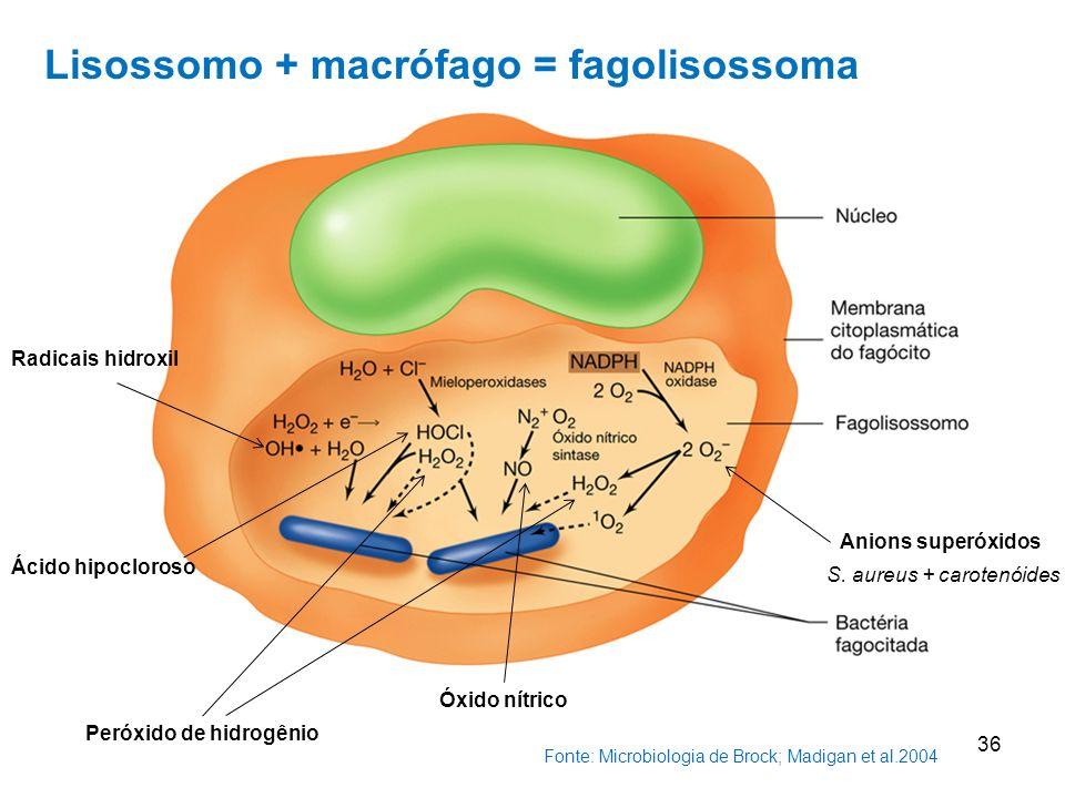 Fonte: Microbiologia de Brock; Madigan et al.2004 36 Peróxido de hidrogênio Anions superóxidos Radicais hidroxil Ácido hipocloroso Óxido nítrico Lisossomo + macrófago = fagolisossoma S.