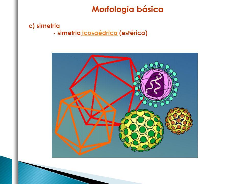 c) simetria - simetria icosaédrica (esférica) Morfologia básica