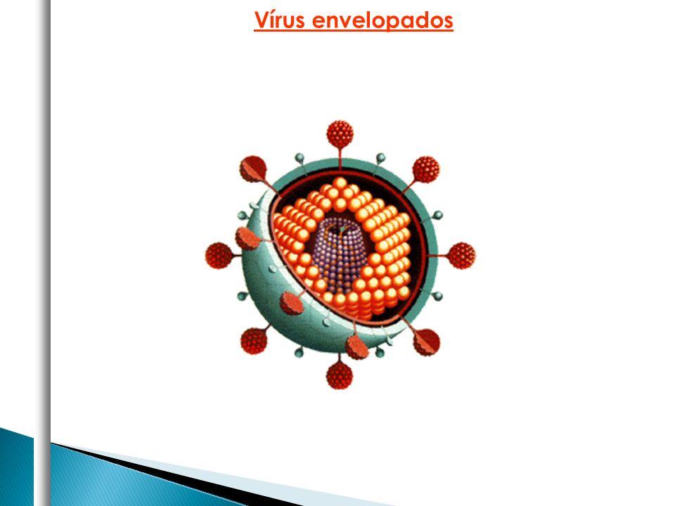 Vírus envelopados