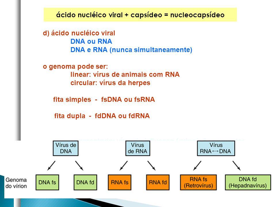 ácido nucléico viral + capsídeo = nucleocapsídeo d) ácido nucléico viral DNA ou RNA DNA e RNA (nunca simultaneamente) o genoma pode ser: linear: vírus