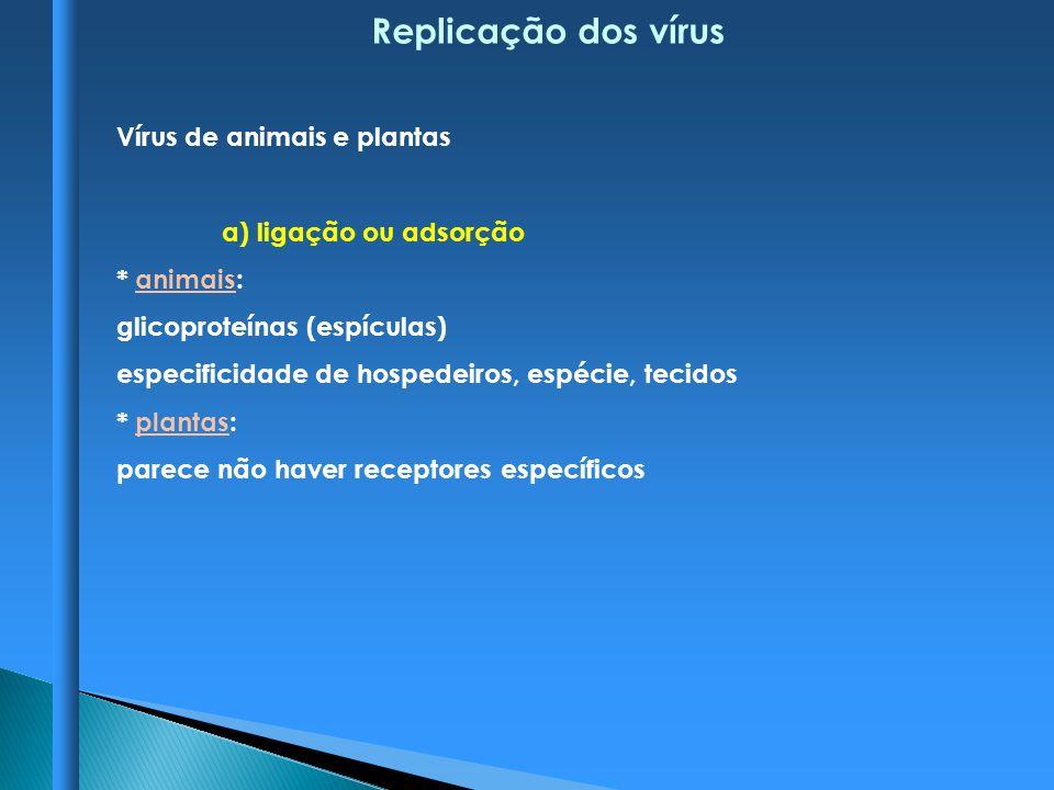 Replicação dos vírus Vírus de animais e plantas a) ligação ou adsorção * animais: glicoproteínas (espículas) especificidade de hospedeiros, espécie, t