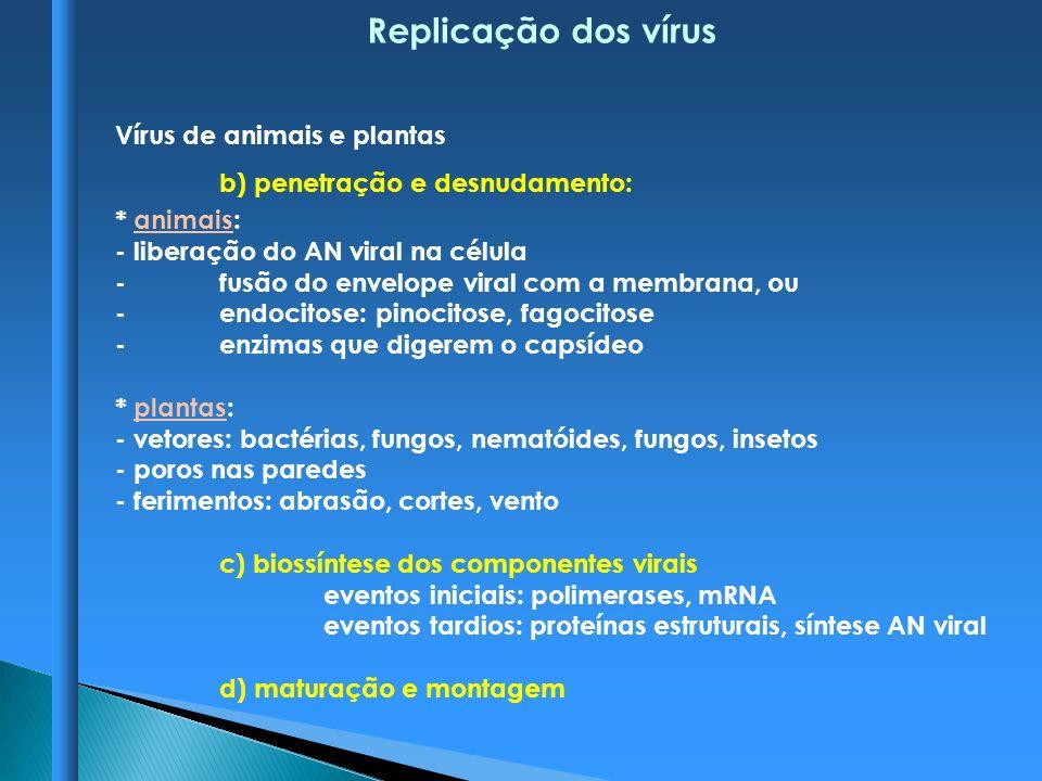 Replicação dos vírus Vírus de animais e plantas b) penetração e desnudamento: * animais: - liberação do AN viral na célula -fusão do envelope viral co
