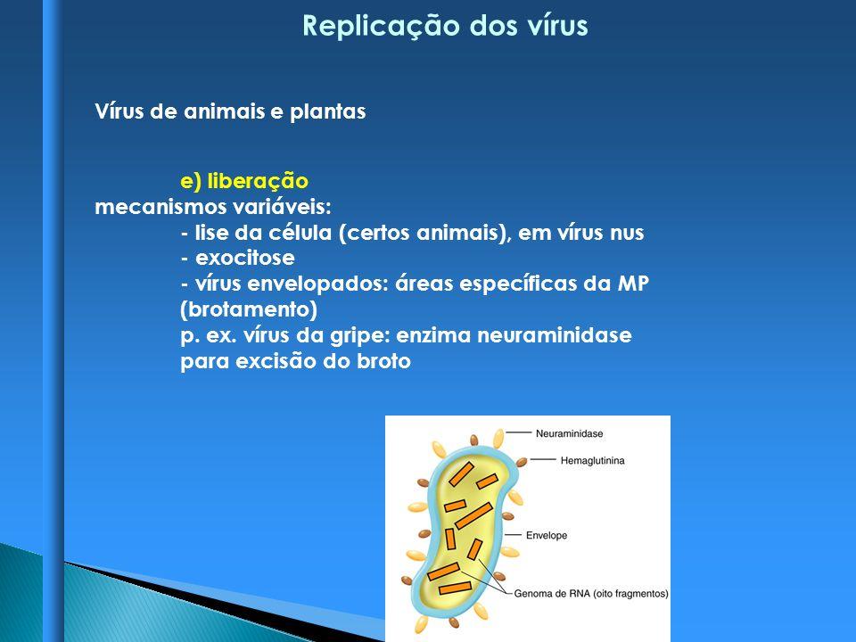 Replicação dos vírus Vírus de animais e plantas e) liberação mecanismos variáveis: - lise da célula (certos animais), em vírus nus - exocitose - vírus