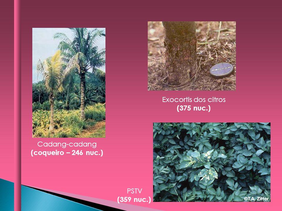 Cadang-cadang (coqueiro – 246 nuc.) Exocortis dos citros (375 nuc.) PSTV (359 nuc.)