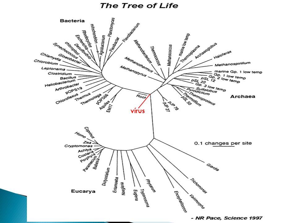 Mundo de DNA viral LUCA (Genoma de RNA) LUCA = last universal common ancestor Archaea Eukarya Bacteria Linhagens extintas Transição de RNA a DNA fvA fvE fvB Evolução