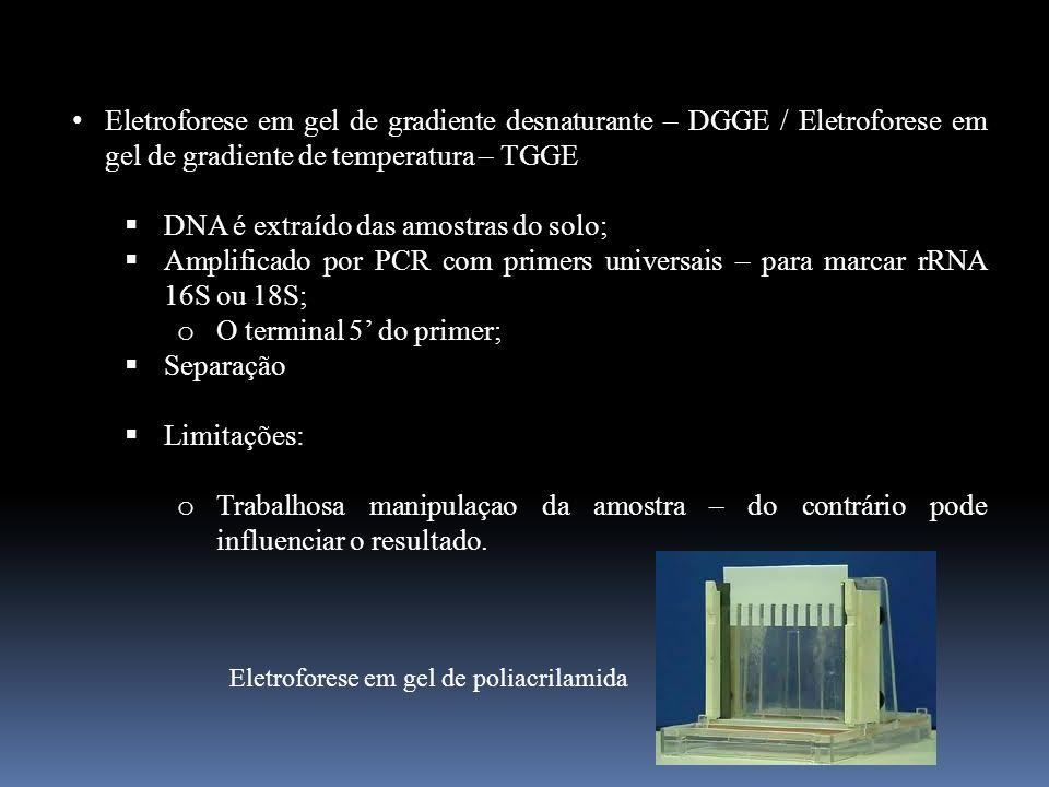 Eletroforese em gel de gradiente desnaturante – DGGE / Eletroforese em gel de gradiente de temperatura – TGGE DNA é extraído das amostras do solo; Amp
