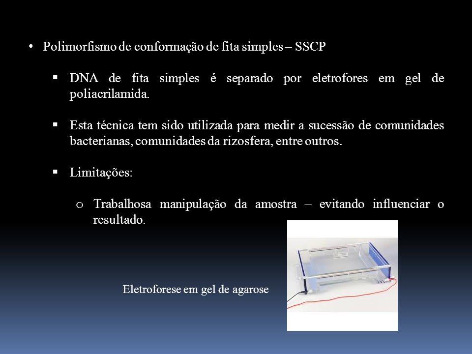 Polimorfismo de conformação de fita simples – SSCP DNA de fita simples é separado por eletrofores em gel de poliacrilamida. Esta técnica tem sido util