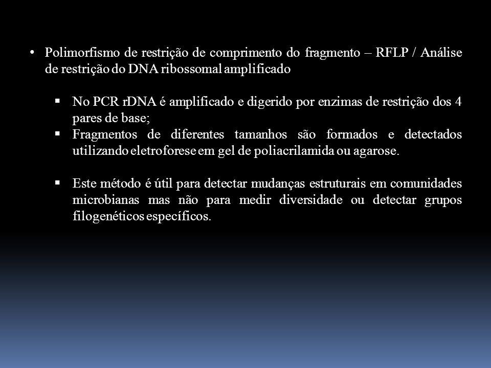 Polimorfismo de restrição de comprimento do fragmento – RFLP / Análise de restrição do DNA ribossomal amplificado No PCR rDNA é amplificado e digerido