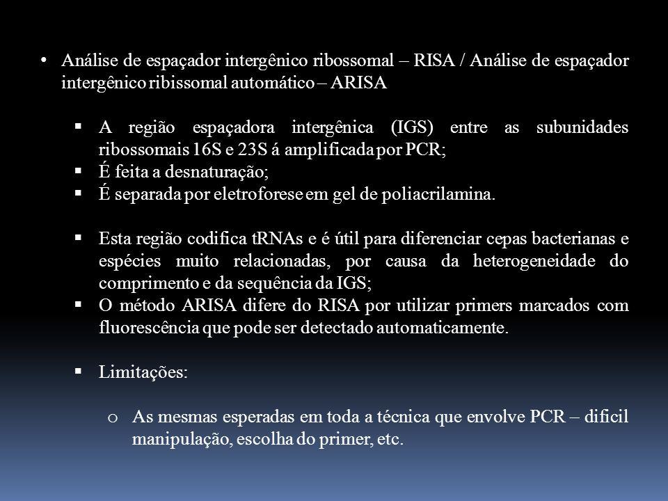 Análise de espaçador intergênico ribossomal – RISA / Análise de espaçador intergênico ribissomal automático – ARISA A região espaçadora intergênica (I