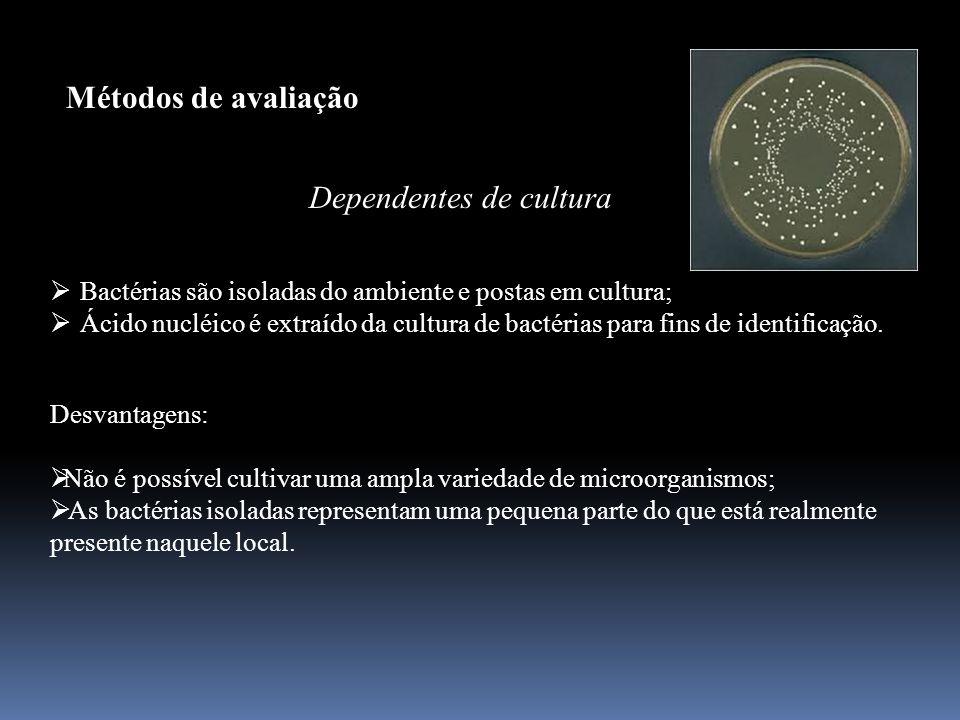Métodos de avaliação Dependentes de cultura Bactérias são isoladas do ambiente e postas em cultura; Ácido nucléico é extraído da cultura de bactérias