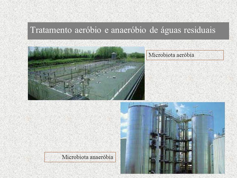 Tratamento aeróbio e anaeróbio de águas residuais Microbiota aeróbia Microbiota anaeróbia