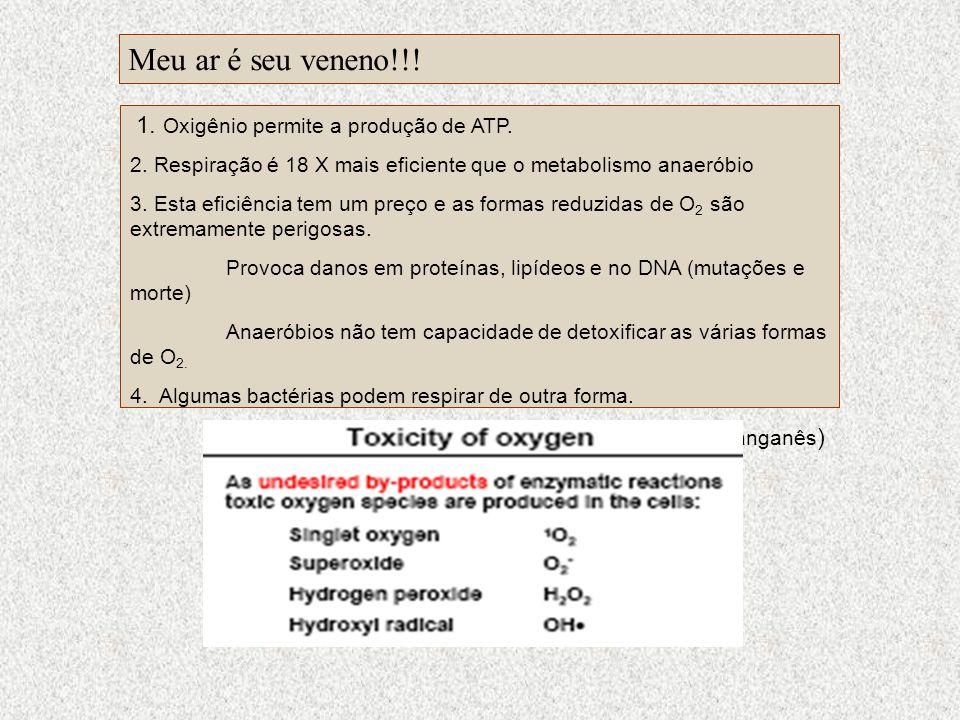 1. Oxigênio permite a produção de ATP. 2. Respiração é 18 X mais eficiente que o metabolismo anaeróbio 3. Esta eficiência tem um preço e as formas red