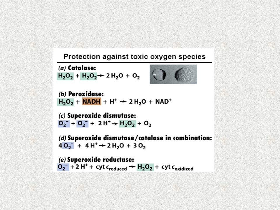 Grupos em relação aos requisitos de O 2 a)Aeróbios obrigatórios b)Anaeróbios obrigatórios c)Aeróbios facultativos d)Microaerófilos e)Anaeróbios aerotolerantes f)Anaeróbios estritos