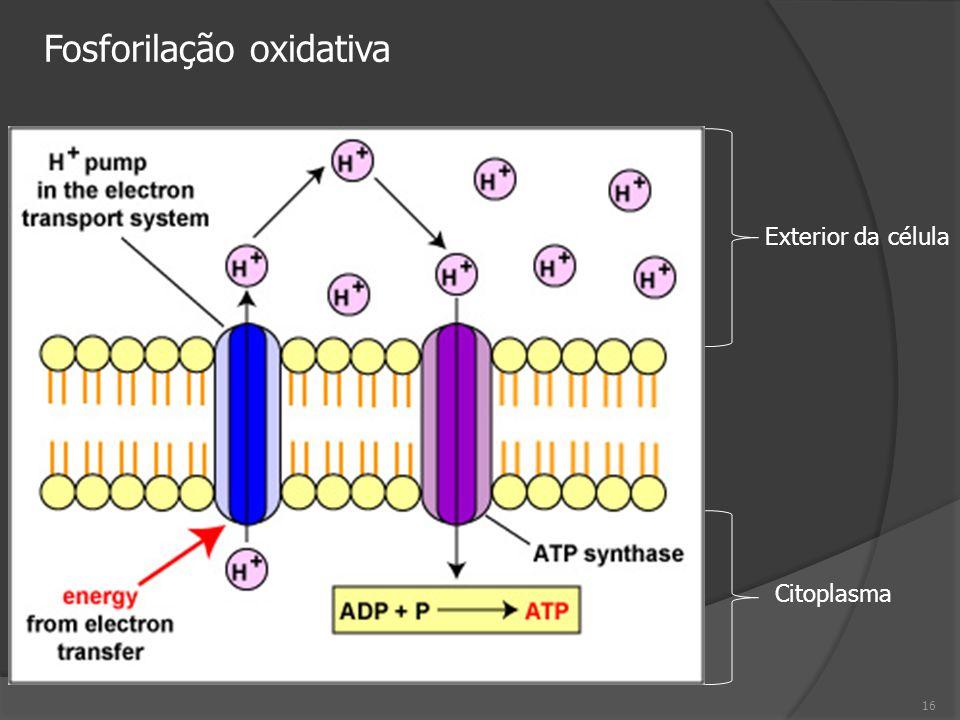 Exterior da célula Citoplasma 16 Fosforilação oxidativa