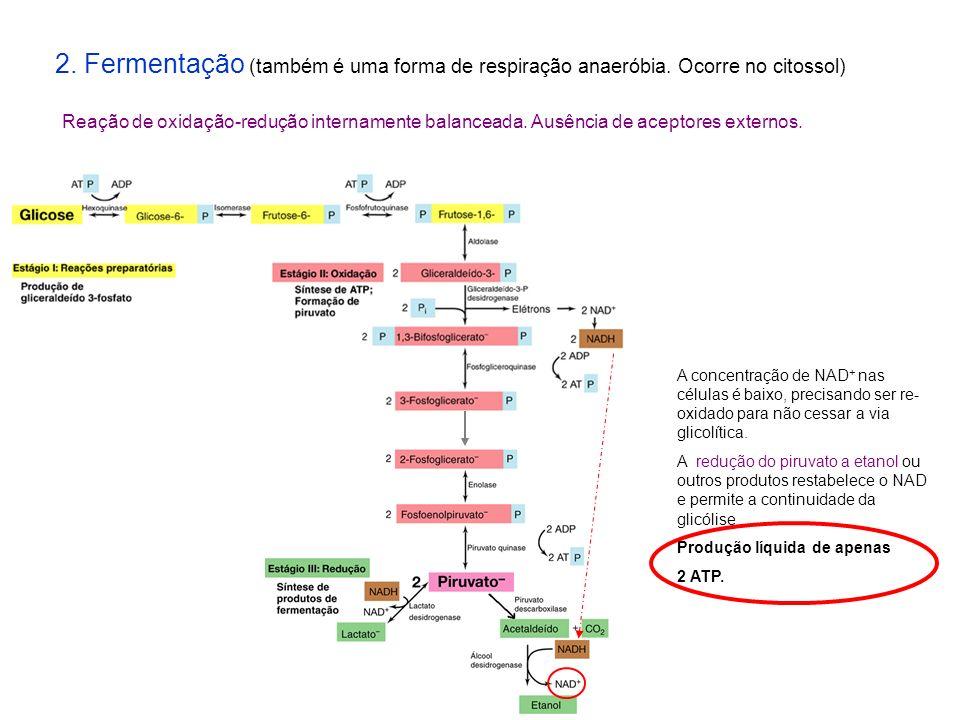 2. Fermentação (também é uma forma de respiração anaeróbia. Ocorre no citossol) Reação de oxidação-redução internamente balanceada. Ausência de acepto