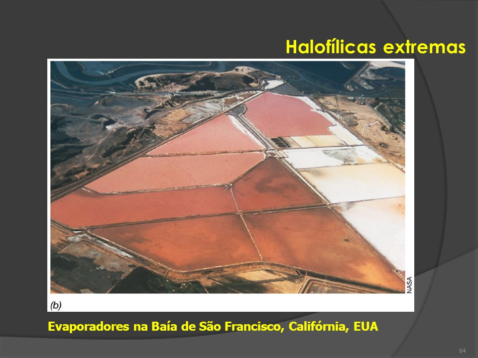 Halofílicas extremas Evaporadores na Baía de São Francisco, Califórnia, EUA 64