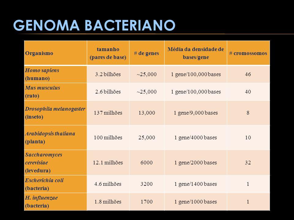 GENOMA BACTERIANO Organismo tamanho (pares de base) # de genes Média da densidade de bases/gene # cromossomos Homo sapiens (humano) 3.2 bilhões~25,000