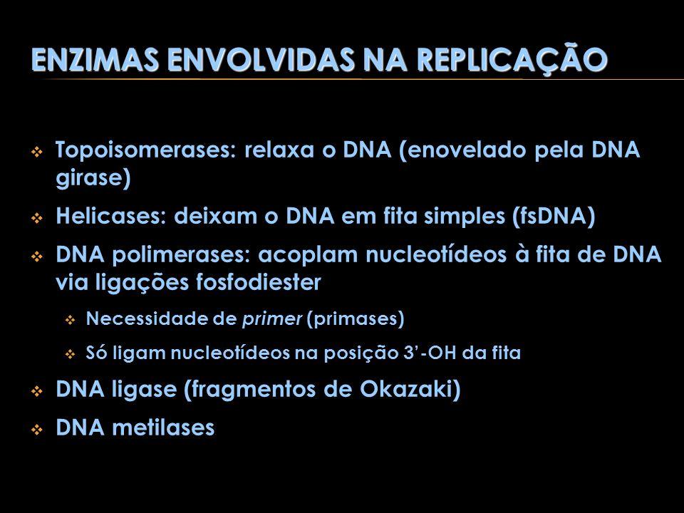ENZIMAS ENVOLVIDAS NA REPLICAÇÃO Topoisomerases: relaxa o DNA (enovelado pela DNA girase) Helicases: deixam o DNA em fita simples (fsDNA) DNA polimera