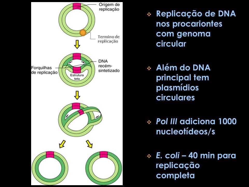 Replicação de DNA nos procariontes com genoma circular Além do DNA principal tem plasmídios circulares Pol III adiciona 1000 nucleotídeos/s E. coli –