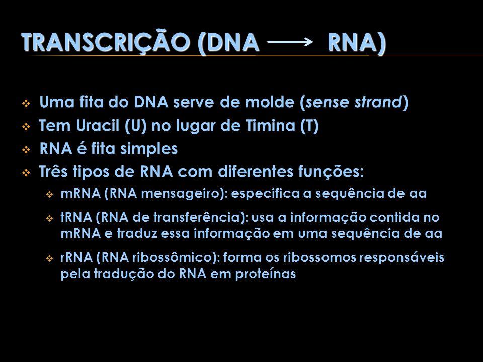 TRANSCRIÇÃO (DNA RNA) Uma fita do DNA serve de molde ( sense strand ) Tem Uracil (U) no lugar de Timina (T) RNA é fita simples Três tipos de RNA com d