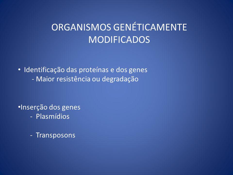 ORGANISMOS GENÉTICAMENTE MODIFICADOS Identificação das proteínas e dos genes - Maior resistência ou degradação Inserção dos genes - Plasmídios - Trans