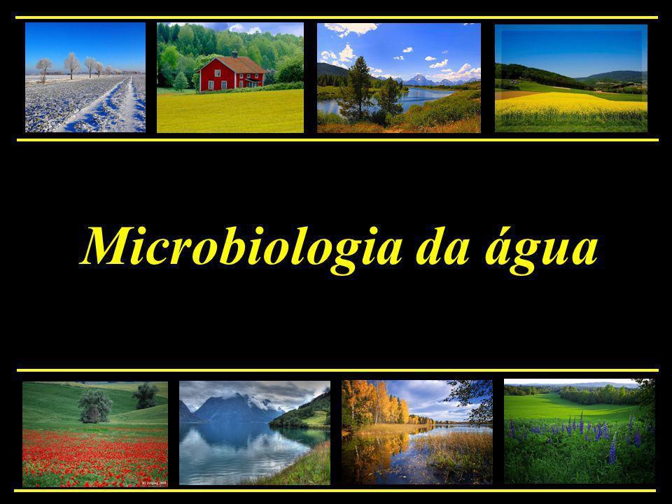 O meio aquático: nutrientes diluídos baixa diversidade de microrganismos A presença de matéria orgânica: aumento da atividade microbiana com aumento das populações microbianas devido ao aumento da carga orgânica = eutrofização Introdução