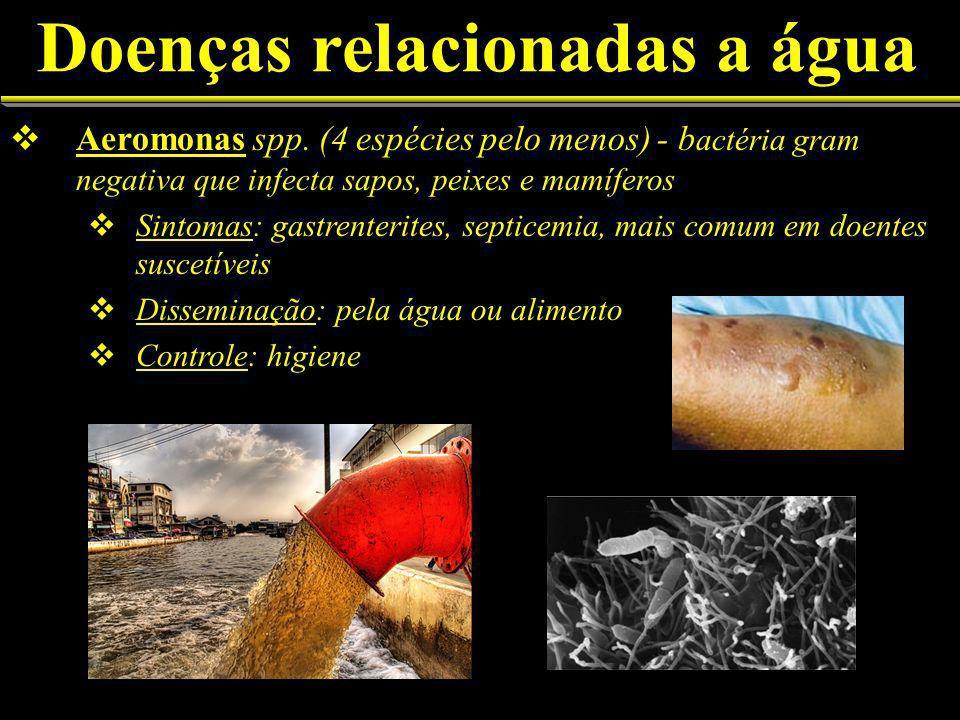 Doenças relacionadas a água Aeromonas spp.