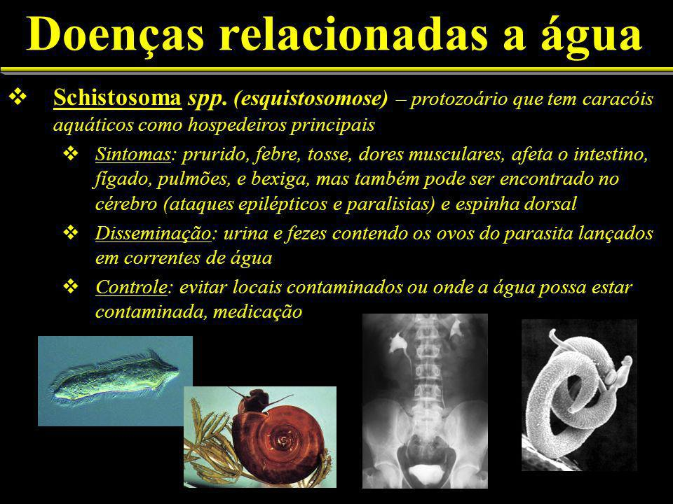 Doenças relacionadas a água Schistosoma spp.