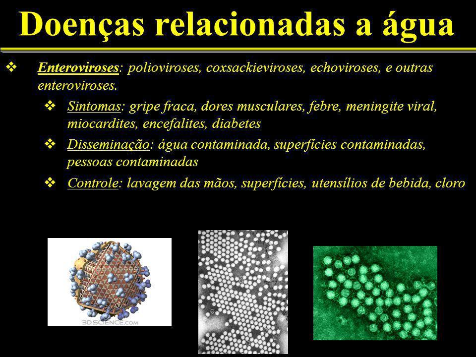 Doenças relacionadas a água Enteroviroses: polioviroses, coxsackieviroses, echoviroses, e outras enteroviroses.