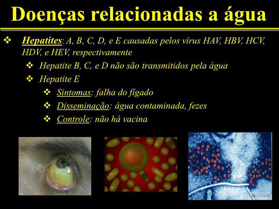 Doenças relacionadas a água Hepatites : A, B, C, D, e E causadas pelos vírus HAV, HBV, HCV, HDV, e HEV, respectivamente Hepatite B, C, e D não são transmitidos pela água Hepatite E Sintomas: falha do fígado Disseminação: água contaminada, fezes Controle: não há vacina