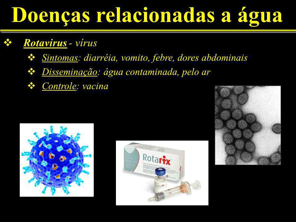 Doenças relacionadas a água Rotavirus - vírus Sintomas: diarréia, vomito, febre, dores abdominais Disseminação: água contaminada, pelo ar Controle: vacina