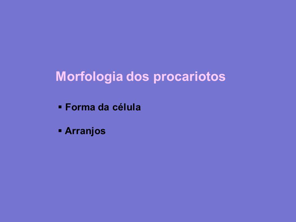 Morfologia dos procariotos Forma da célula Arranjos
